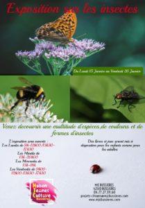 MJC Bussières - Exposition Insectes